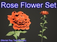 3d set rose flowers model