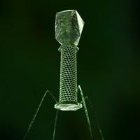 3d model bacteriophage dna
