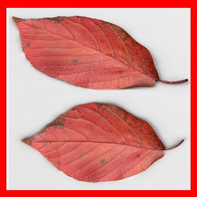 fallen_leaf_th_01.jpg