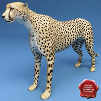 maya cheetah modelled