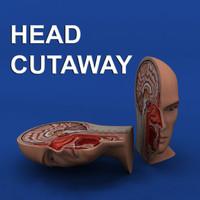 cutaway anatomy head 3d max