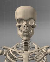 3d max realistic man skeleton