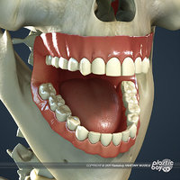 Dental, Teeth, Gums & Skull Textured Pack