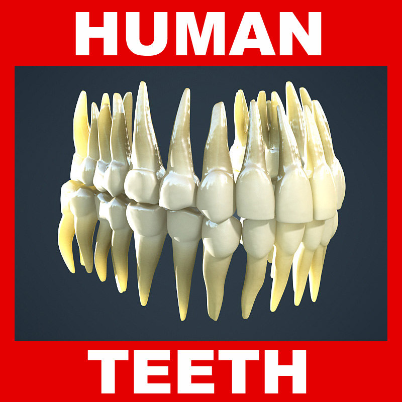 Human_Teeth.jpg