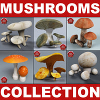 Mushrooms Collection