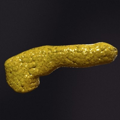 pancreas2.jpg