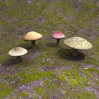 3d 4 mushrooms