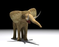elephant animation 3d max