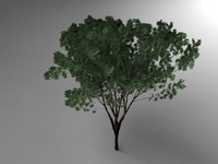3d keyaki tree
