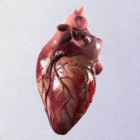 3ds max photorealistic heart