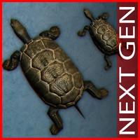 max mauremys turtle