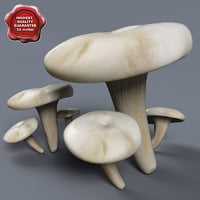 Pleurotus ostreatus collection