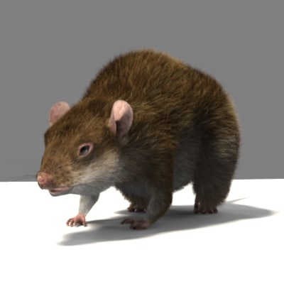 Sample_Rat_04.jpg
