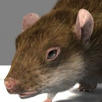 lightwave talking rat fur