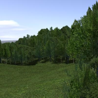 Forest_01.jpg