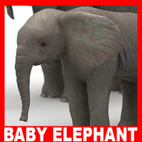 Baby Elephant (High and Low Poly)