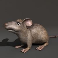 3d rat mouse