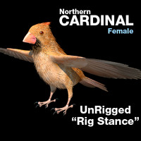 Cardinal-Female-Mapped-RigStance