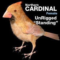 Cardinal - Female - Standing Wings Folded