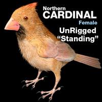 maya cardinal - female standing