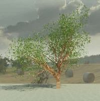 3d model of olea europaea