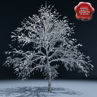 Winter Tree V1