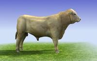 3d model white bull