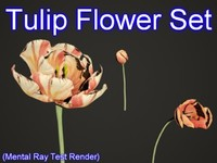Tulip Flower Set 001