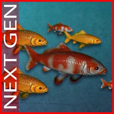 koi_fish_cover_02.jpg