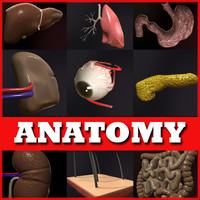 maya anatomical realistic medical