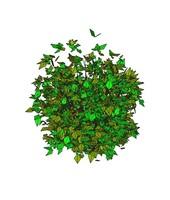 3ds max bush -