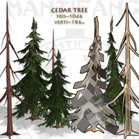 Cedar Tree Collection
