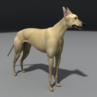 Dog_greyhound.rar