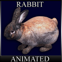 3d bunny der hase