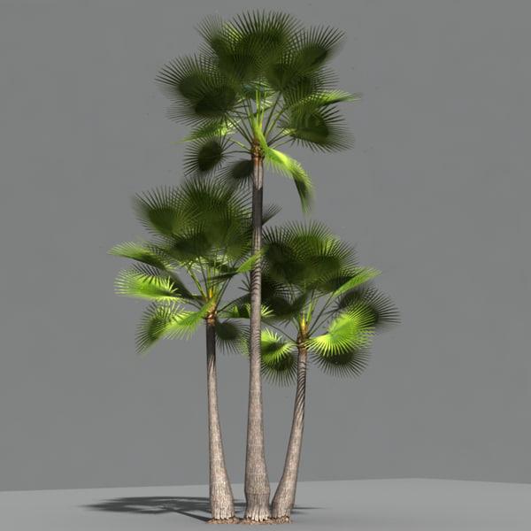 Palm_01.jpg