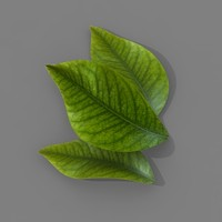 3d model citrus leaf