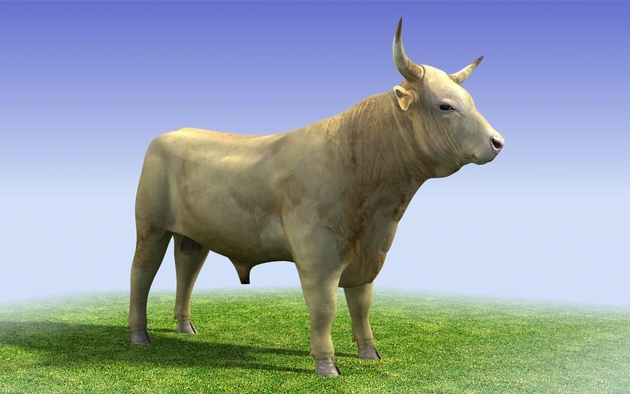 white_bull_3d_model_sample01.jpg