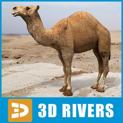Arabian_Camel_logo.jpg