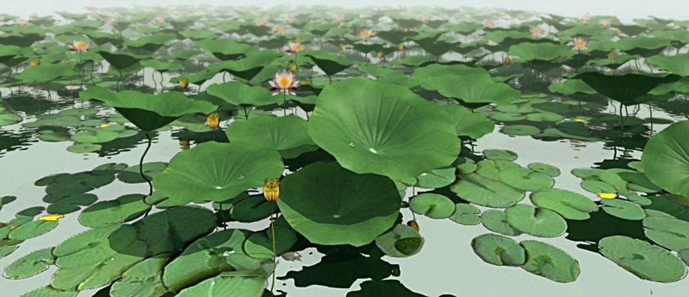 lotus_preview.jpg