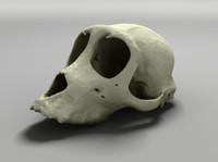 3d model skull monkey