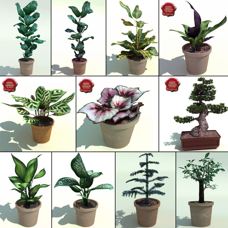 Interior_Plants_Collection_V4_00.jpg