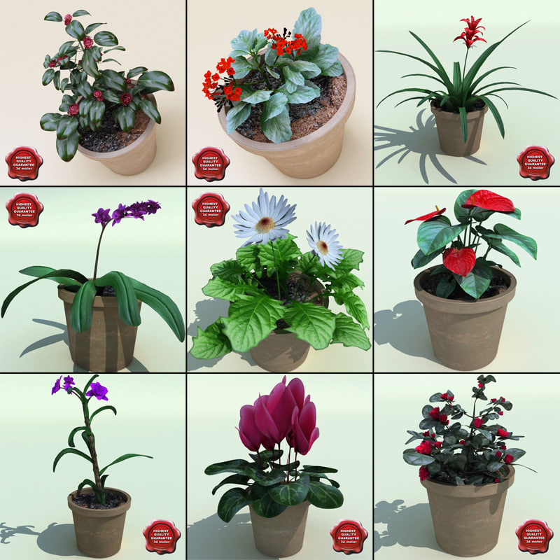 Interior_Plants_Collection_V5_00.jpg