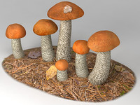 orange birch bolete 3d 3ds