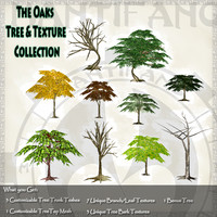 Country Oak Tree & Texture Collection