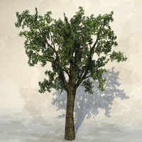 3d model of pc tree