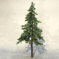 Tree_057.zip