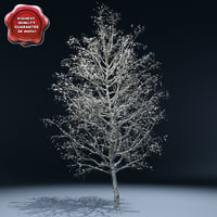 winter tree v3 3d lwo