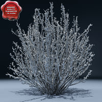 Winter Tree V7