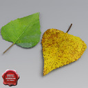 birch leaves 3D models