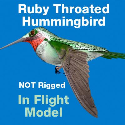 Ruby Throated HummingBird-InFlight